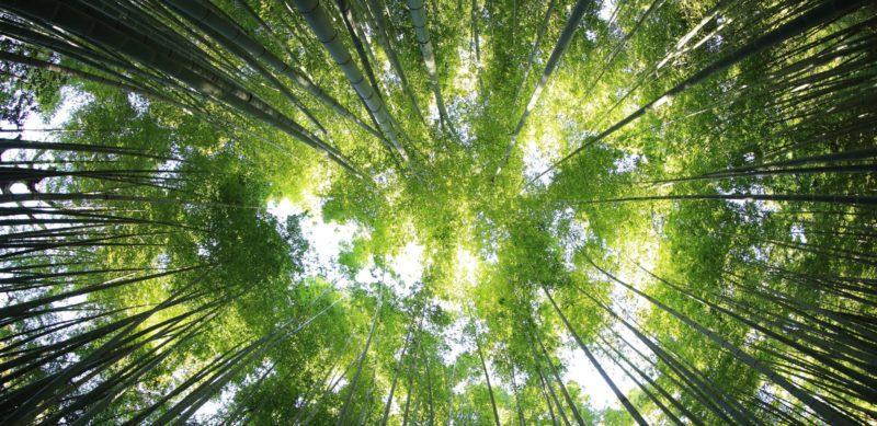 Zone d'innovation en bioéconomie forestière